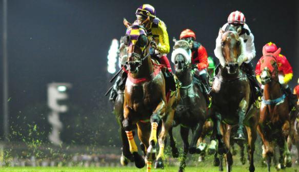 Singapore Horse Racing Odds